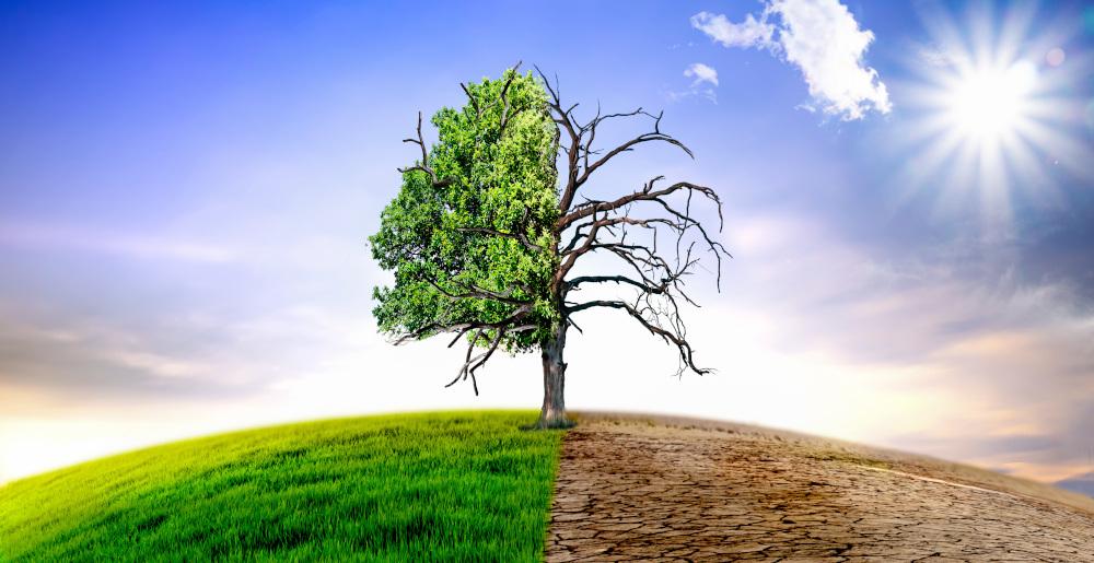 zmiana klimatu zobrazowana za pomoca drzewa ktore z jednej strony jest zielone a z drugiej uschnięte